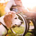 障害者控除の控除不足額、扶養していない扶養義務者からも差し引けます